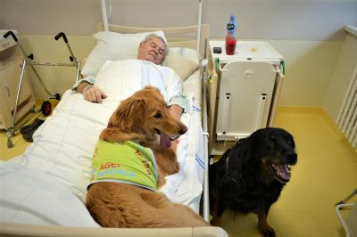 Fenky Bella a Anička nově pomáhají canisterapií i pacientům v Nemocnici Prostějov